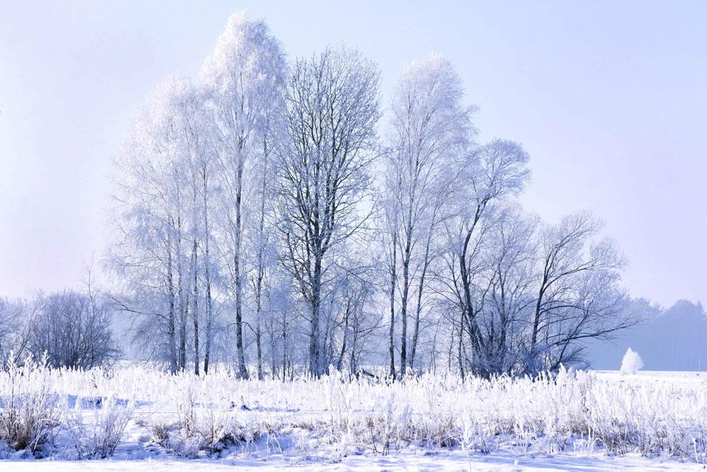 Zimowy krajobraz, drzewa otulone szronem